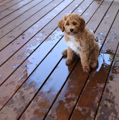 I have no idea who spilled this water!